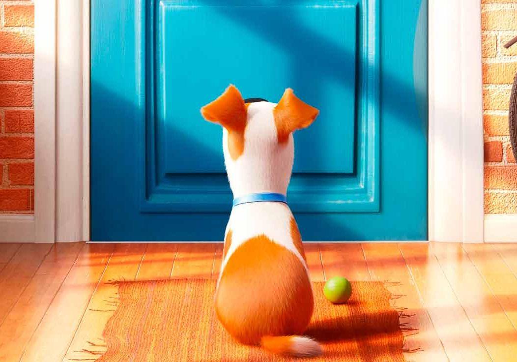 la vida secreta de tus mascotas dibujos para colorear